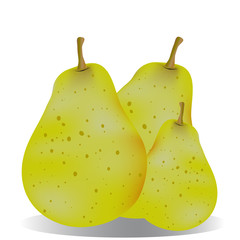 Juicy pears green vector illustration