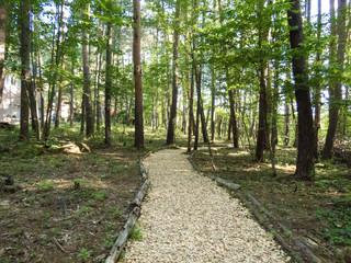 森のハイキングコース