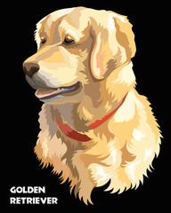Colorful Vector Golden retriever