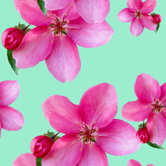 Apple flowers. Seamless pattern texture of flowers. Floral background, photo collage