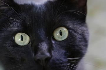 Die Augen einer schwarzen Katze