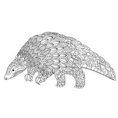 Hand drawn doodle illustration of pangolin.