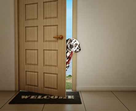 Dalmatian dog waiting near the door with leather leash, ready to go for a walk with his owner