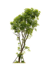 Tree with grass isolated