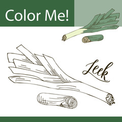 Education coloring page with vegetable. Hand drawn vector illustration of leek.