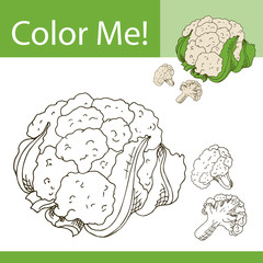 Education coloring page with vegetable. Hand drawn vector illustration of couliflower.