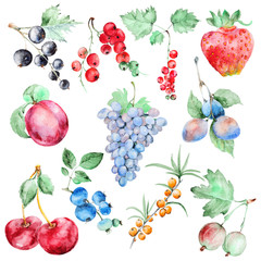 Watercolor fruits set