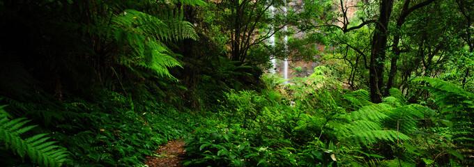 Door stickers Australia Landscape : Queen Mary Falls of Main Range National Park in Queensland