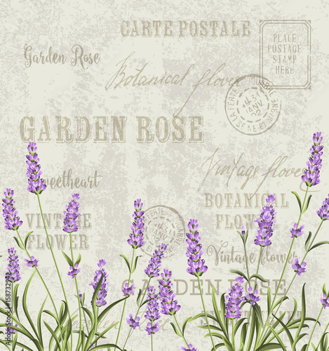 Wall mural The lavender elegant card. Vintage postcard background vector template for wedding invitation. Label with lavender flowers. Vector illustration.