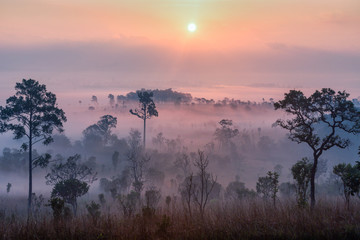 Beautiful forest landscape of foggy sunrise in Thung salaeng Luang National Park, Thailand