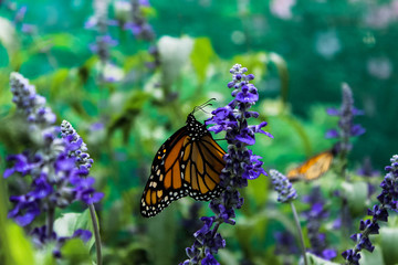 Monarch butterfly with wildflowers