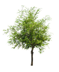 green tree nature isolated on white background