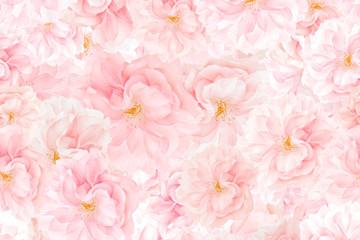 Sakura blossoms background