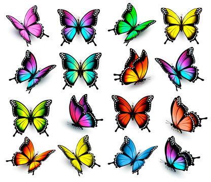 Colorful butterflies set. Vector.