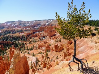 View of Bryce Canyon National Park, Utah, United States of America, North America