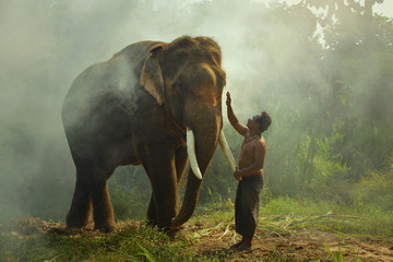 Young elephant and Man on sunrise in the field