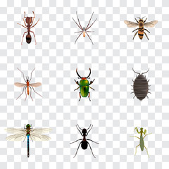 Realistic Grasshopper, Spider, Insect And Other Vector Elements. Set Of  Realistic Symbols Also Includes Pismire, Green, Alive Objects.