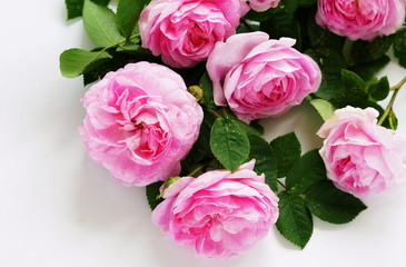 A beautiful bouquet of pink roses on a white background.holiday concept. top view