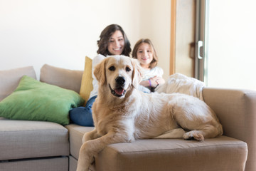 Dog with human family at home
