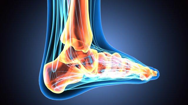 3D illustration of Foot Skeleton - Part of Human Skeleton.