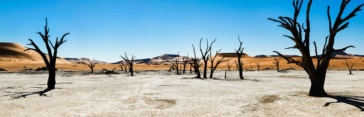 Dead trees and dunes in a salt pan. Hot desert.