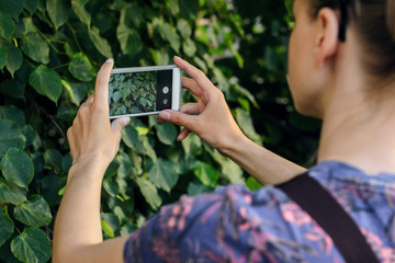 Female taking the texture of nature for memory while traveling. Taking a picture with a smart phone concept