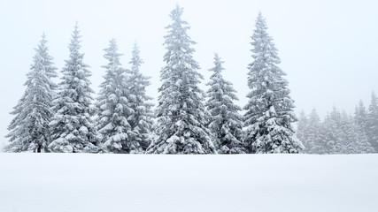 Tannen in Schnee, Eis und Nebel
