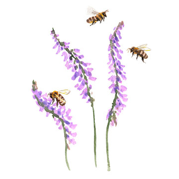 Raster watercolor composition with some bees sitting on a boreal vetch. Summer, nature, rustic themes, design element, printed goods.