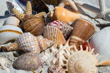 Close up of shells on the beach Sanibel Island