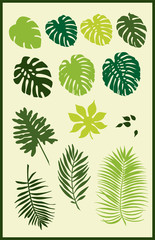 Tropical leaves silhouettes
