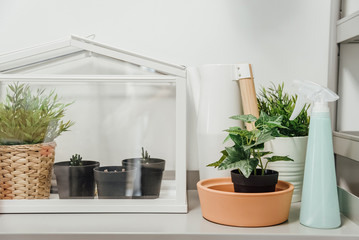 Miniature Green house terrarium..White tabletop mini greenhouse with plant in pot..Glass house terrarium plants and spray bottle.Provides a good environment for seeds to sprout and plants to grow.