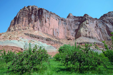 Capitol Reef Orchard