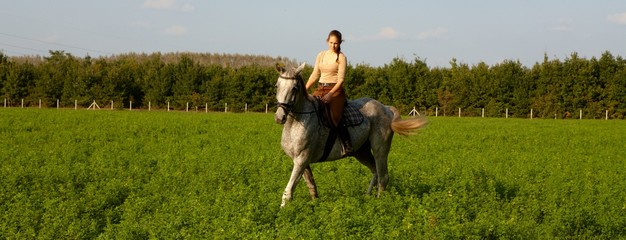 Horse and rider in nature
