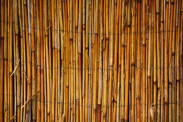 bambus texture