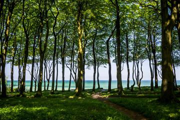 Waldpfad zum Meer an der Ostsse bei Heiligendamm