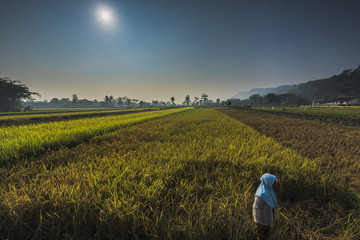 Indonesia Farmland