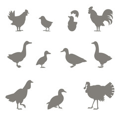 Farm animals. Silhouettes of chickens.