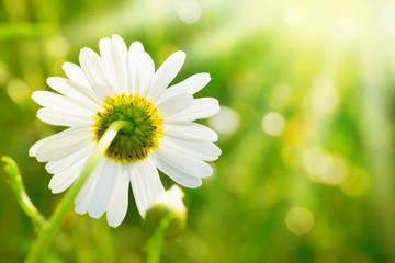 Weiße Blüte im Sonnenlicht