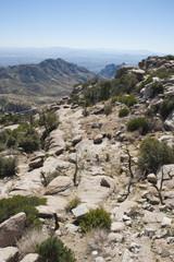 From Desert Floor to Mountain Tops