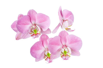 flowers of  beautiful orchid on  white background