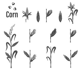 Corn icon - vector illustration.