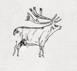 Deer - cave painting from Altamira, Spain