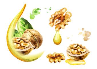 Walnut oil set. Watercolor hand-drawn illustration