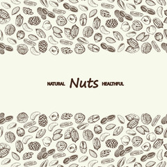 Nuts vector. Hand drawn vintage illustration.
