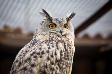 Foto auf Gartenposter Eulen cartoon Portrait of an eagle owl at the zoo