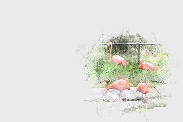 Abstract Flamingo on watercolor background, Watercolor painting, Flamingo