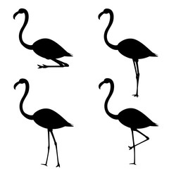 Set of silhouettes of flamingo in different poses. Vector illustration