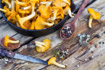 Fresh yellow forest chanterelle mushrooms