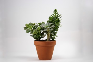 Small potted plant