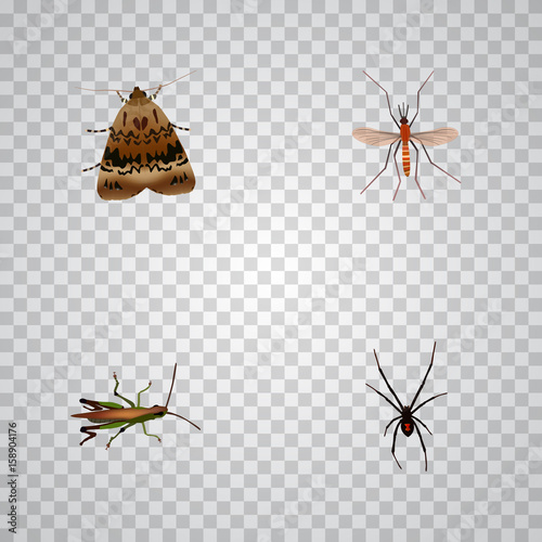 Realistic Locust, Gnat, Spinner And Other Vector Elements